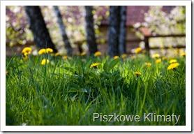 Wiosna-2012-343[1]